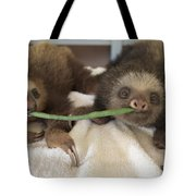 Hoffmanns Two-toed Sloth Orphans Eating Tote Bag by Suzi Eszterhas
