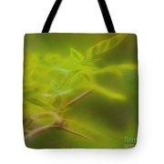 Honey Locust Tote Bag by Judi Bagwell