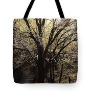 Iced Tote Bag by Karol Livote