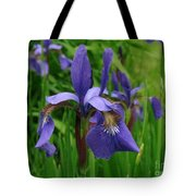 Irises Tote Bag by Randi Shenkman