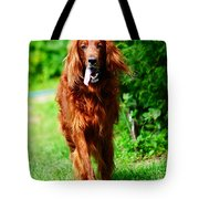 Irish Setter V Tote Bag by Jenny Rainbow