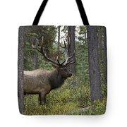 Jasper National Park, Jasper, Alberta Tote Bag by Philippe Widling