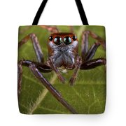 Jumping Spider Papua New Guinea Tote Bag by Piotr Naskrecki