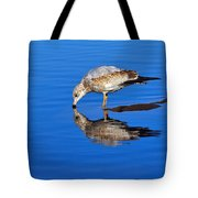 Juvenile Ring-billed Gull  Tote Bag by Tony Beck