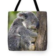 Koala Phascolarctos Cinereus Sleeping Tote Bag by Pete Oxford