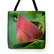 Lotus Bud--bud In A Blanket Dl049 Tote Bag by Gerry Gantt