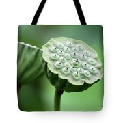 Lotus Seed Pods Tote Bag by Sabrina L Ryan