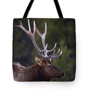 Male Elk Cervus Canadensis Tote Bag by Richard Wear
