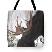Male Moose Grazing In Winter, Gaspesie Tote Bag by Philippe Henry