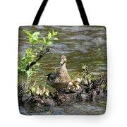Mallard Duckling Rest  Tote Bag by Neal Eslinger