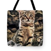 mediterranean wild babe cat Tote Bag by Stylianos Kleanthous