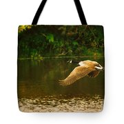 Midmorning Launch Tote Bag by Susan Capuano