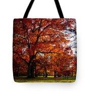 Morton Arboretum In Colorful Fall Tote Bag by Paul Ge