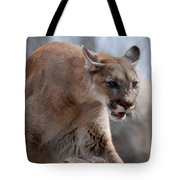 Mountain Lion Tote Bag by Paul Ward