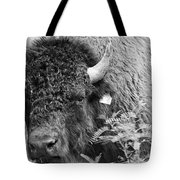 Mr Goodnight's Bison Tote Bag by Melany Sarafis