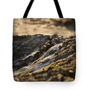 Mussels Sunset Tote Bag by Henrik Lehnerer