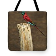 Northern Carmine Bee-eater Tote Bag by Tony Beck