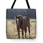One Funny Horse Tote Bag by Robert Margetts