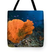 Orange Sponge With Crinoid Attached Tote Bag by Steve Jones
