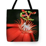 Passiflora Vitifolia - Scarlet Red Passion Flower Tote Bag by Sharon Mau