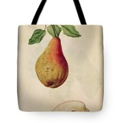 Pear   Pyrus Communis Tote Bag by J le Moyne de Morgues
