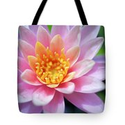 Pink Water Lily Tote Bag by Kicka Witte