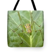 Portrait Of A  Cricket Tote Bag by Cliff  Norton
