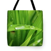 Rain Drops On Grass Tote Bag by Trever Miller