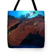Red Fan Cora With Sunburst, Papua New Tote Bag by Steve Jones