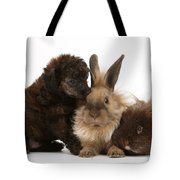 Red Merle Toy Poodle Pup, Guinea Pig Tote Bag by Mark Taylor