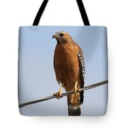 Red-shouldered Hawk . 7d10246 Tote Bag by Wingsdomain Art and Photography