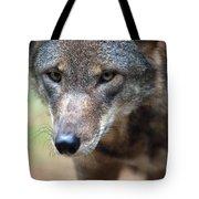 Red Wolf Closeup Tote Bag by Karol  Livote