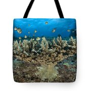 Reticulate Humbugs Gather Under Stone Tote Bag by Steve Jones
