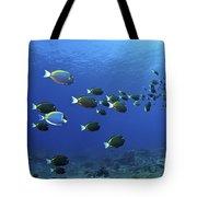School Of Surgeonfish, Christmas Tote Bag by Mathieu Meur