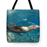 Sea Lion Blowing Bubbles, Los Islotes Tote Bag by Todd Winner