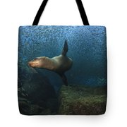 Sea Lion Chasing A School Of Bait Fish Tote Bag by Todd Winner