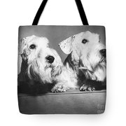 Sealyham Terriers Tote Bag by M E Browning and Photo Researchers