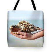 Seashell in hand Tote Bag by Elena Elisseeva