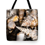Seashells Tote Bag by Hakon Soreide