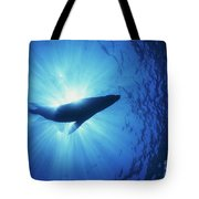 Silhouette Of A Sea Lion, La Paz Tote Bag by Beverly Factor