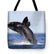 Southern Right Whale Tote Bag by Francois Gohier and Photo Researchers