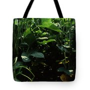 Soybean Leaves Tote Bag by Photo Researchers