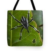 Spider Weevil Papua New Guinea Tote Bag by Piotr Naskrecki