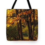 Splendor Of Autumn. Maples In Golden Dresses Tote Bag by Jenny Rainbow