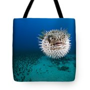 Spotted Porcupinefish II Tote Bag by Dave Fleetham