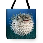 Spotted Porcupinefish IIi Tote Bag by Dave Fleetham