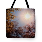 Spring Sunlight Over Cherry Blossoms  Tote Bag by Vivienne Gucwa