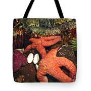 Starfish Medley Tote Bag by Methune Hively