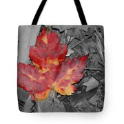 The Red Leaf Tote Bag by Paul Ward
