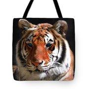 Tiger Blue Eyes Tote Bag by Rebecca Margraf
